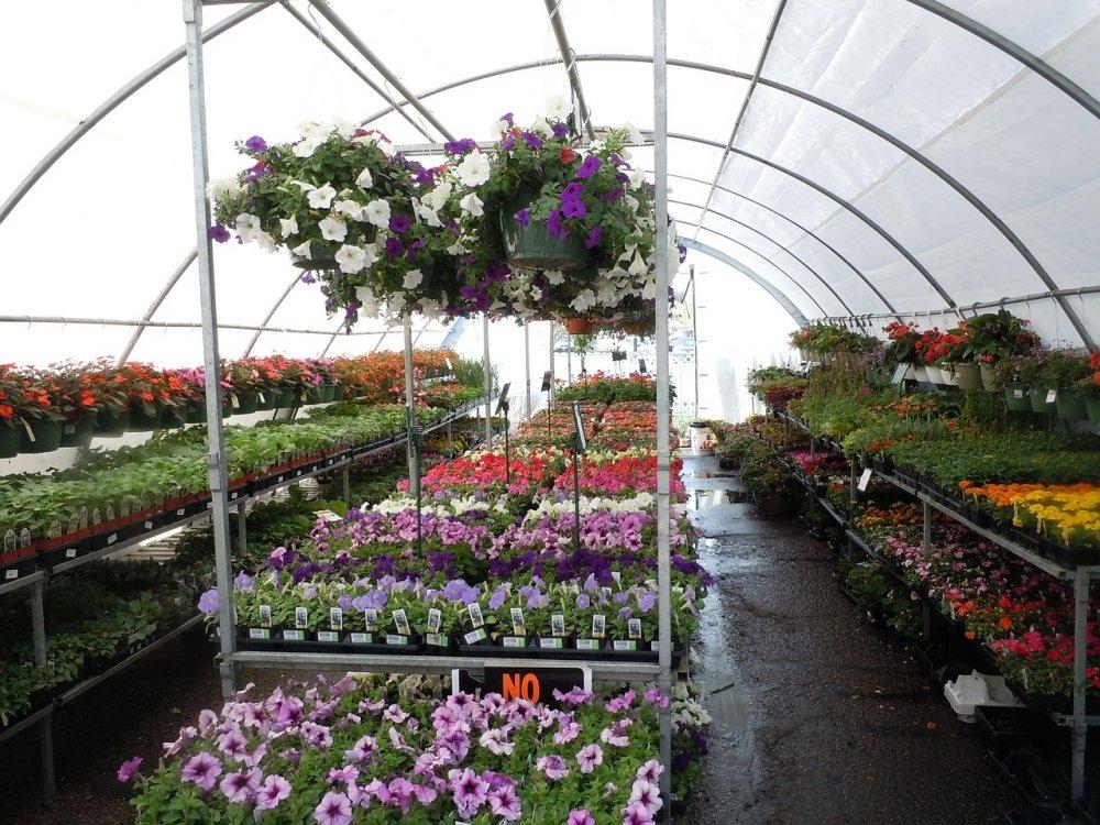 Spendera en härlig lördag på en handelsträdgård